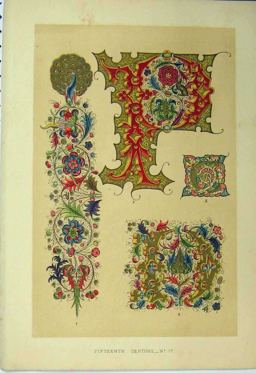 Print Calligraphy Design Colour C1882 Fifteenth Century 129A113 Old Original