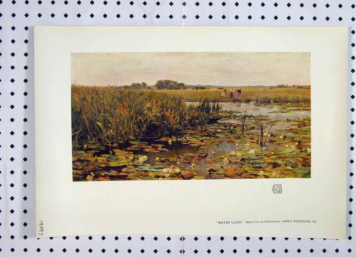 Print Colour Water Lillies Lake Women Working Country 107A119 Old Original