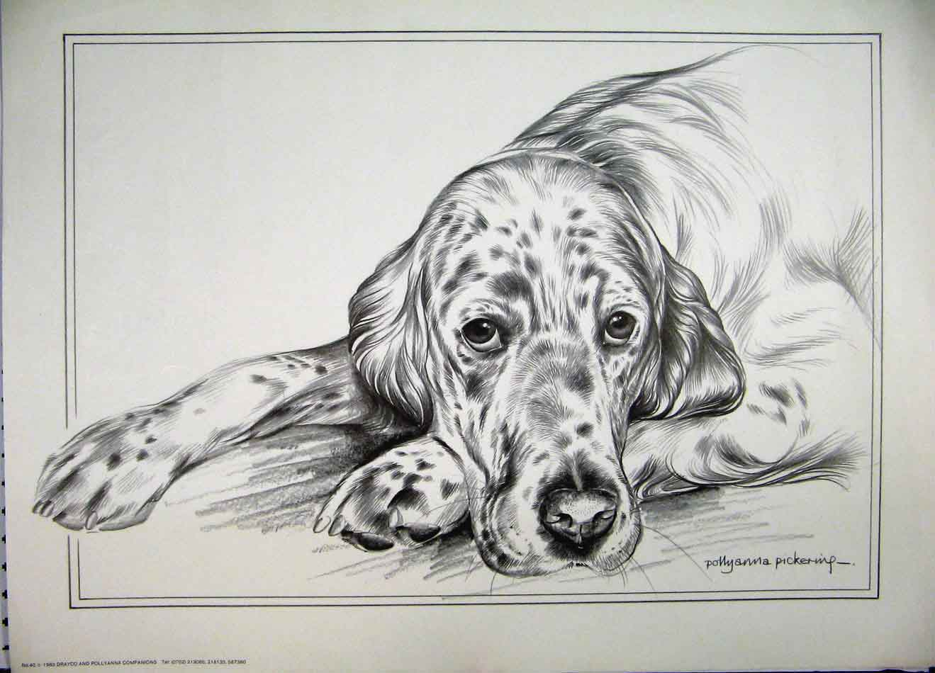 [Print Pollyanna Pickering Cute Spot Dog Lying 101A125 Old Original]