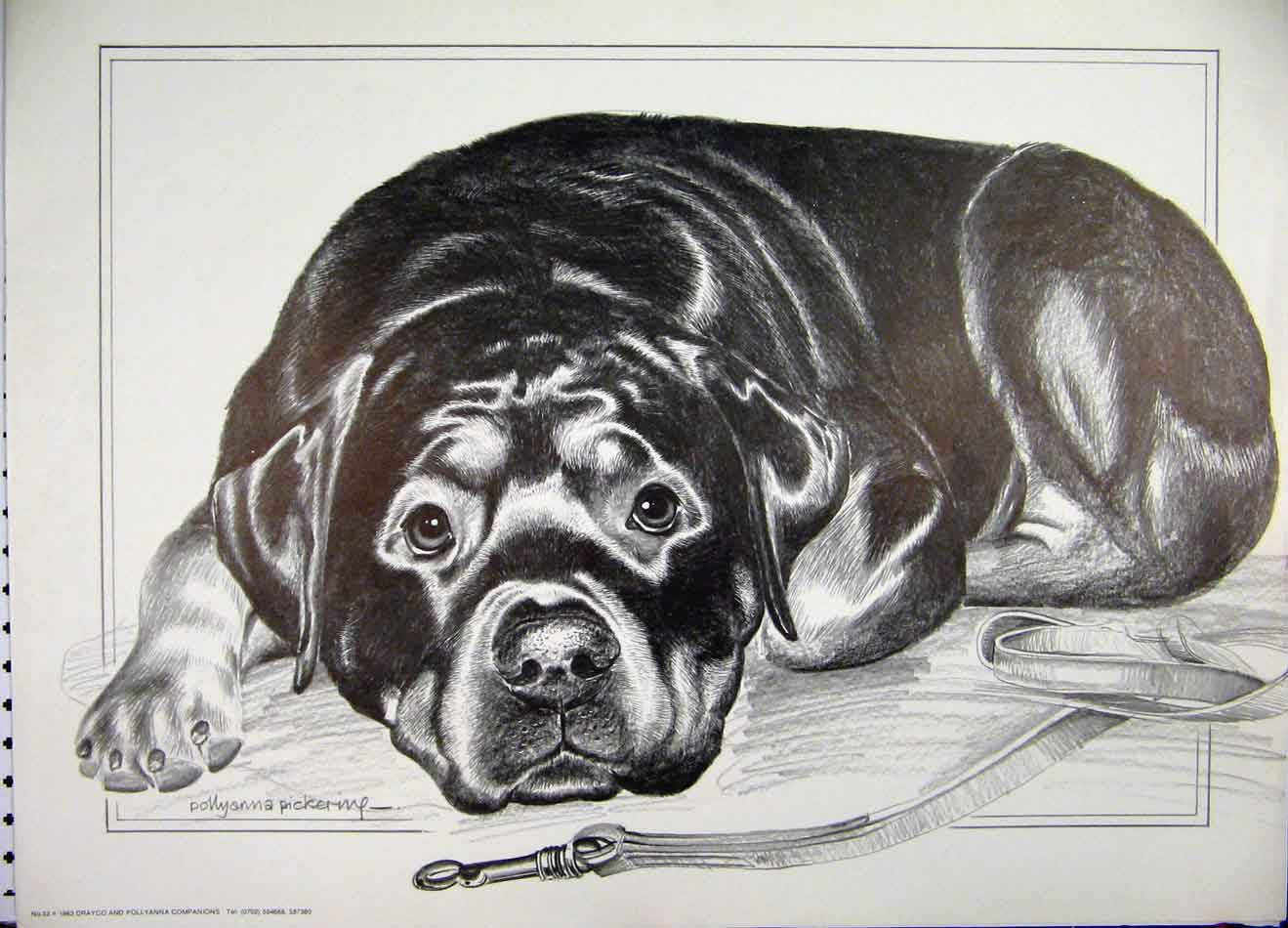 [Print Pollyanna Pickering Black Dog Lying Lead 123A125 Old Original]