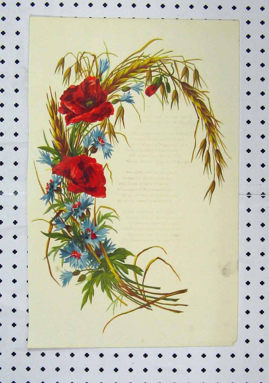 Print C1850 Colour Flowers Red Blue Straw 102A145 Old Original