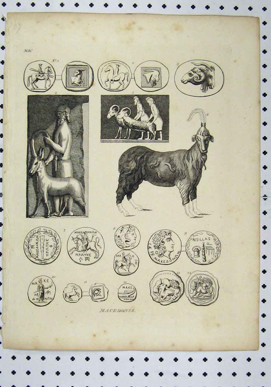Print Macedonia C1850 Goat Money Coins Horse 148A145 Old Original
