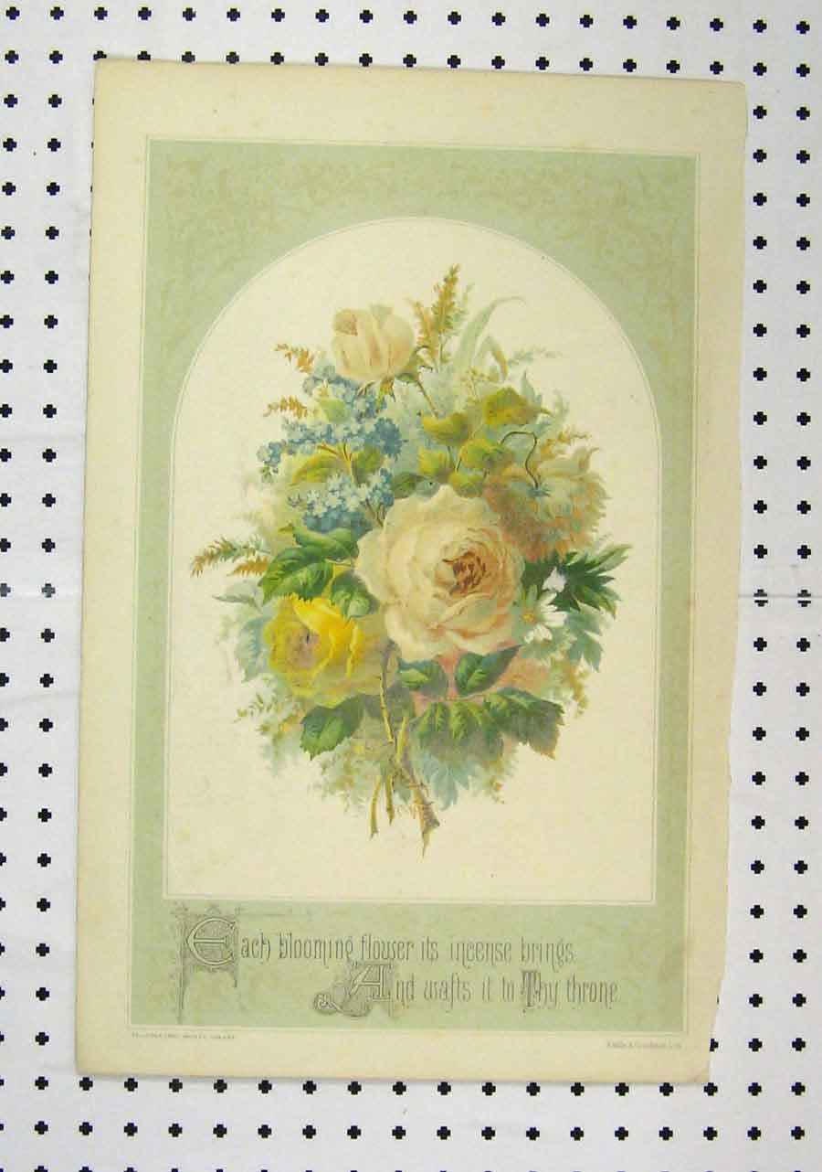 Print C1850 Colour Yellow White Flowers Couchman 168A145 Old Original