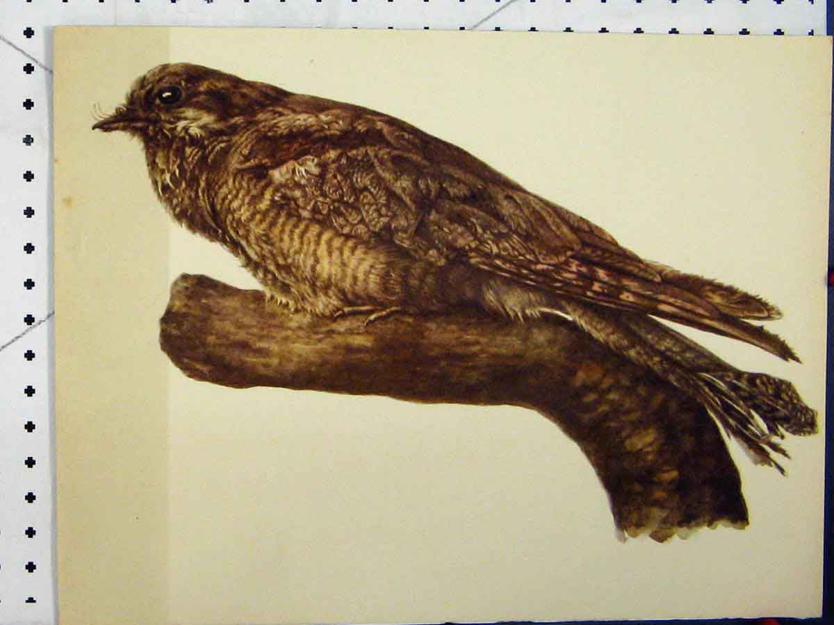 Print Larousse Animal Portrait 1977 Large Brown Bird Colour 159A179 Old Original