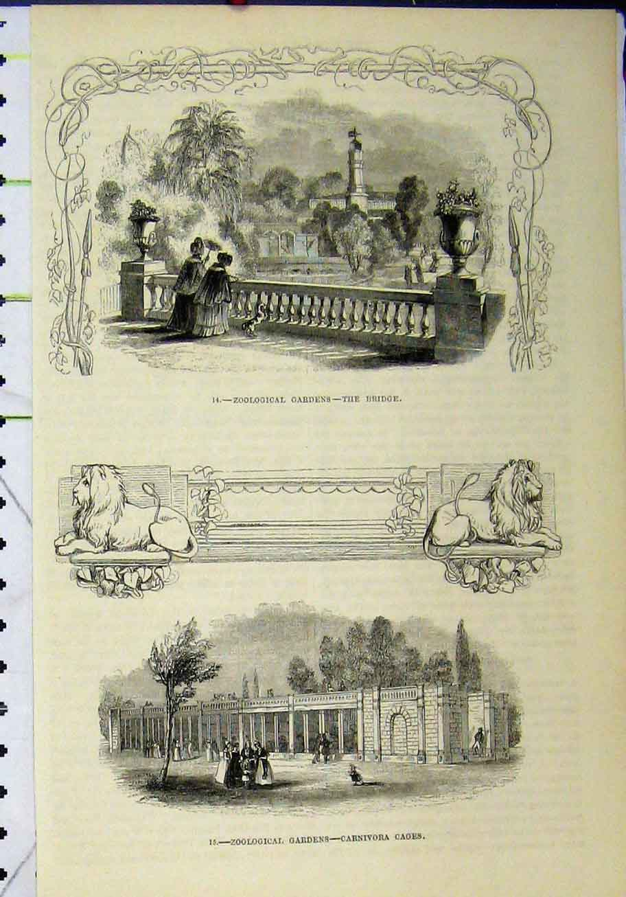 Print Zoological Gardens Bridge Carnivora Cages 262A193 Old Original
