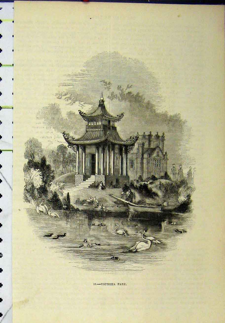 Print Scene Victoria Park Swans Birds Boat House 285A193 Old Original