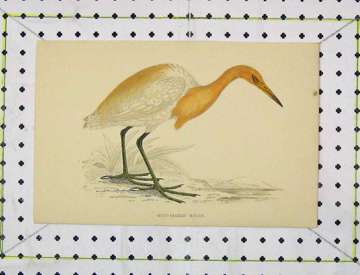 Print Buff-Backed Heron C1850 Colour Nature Wild Bird 174B219 Old Original