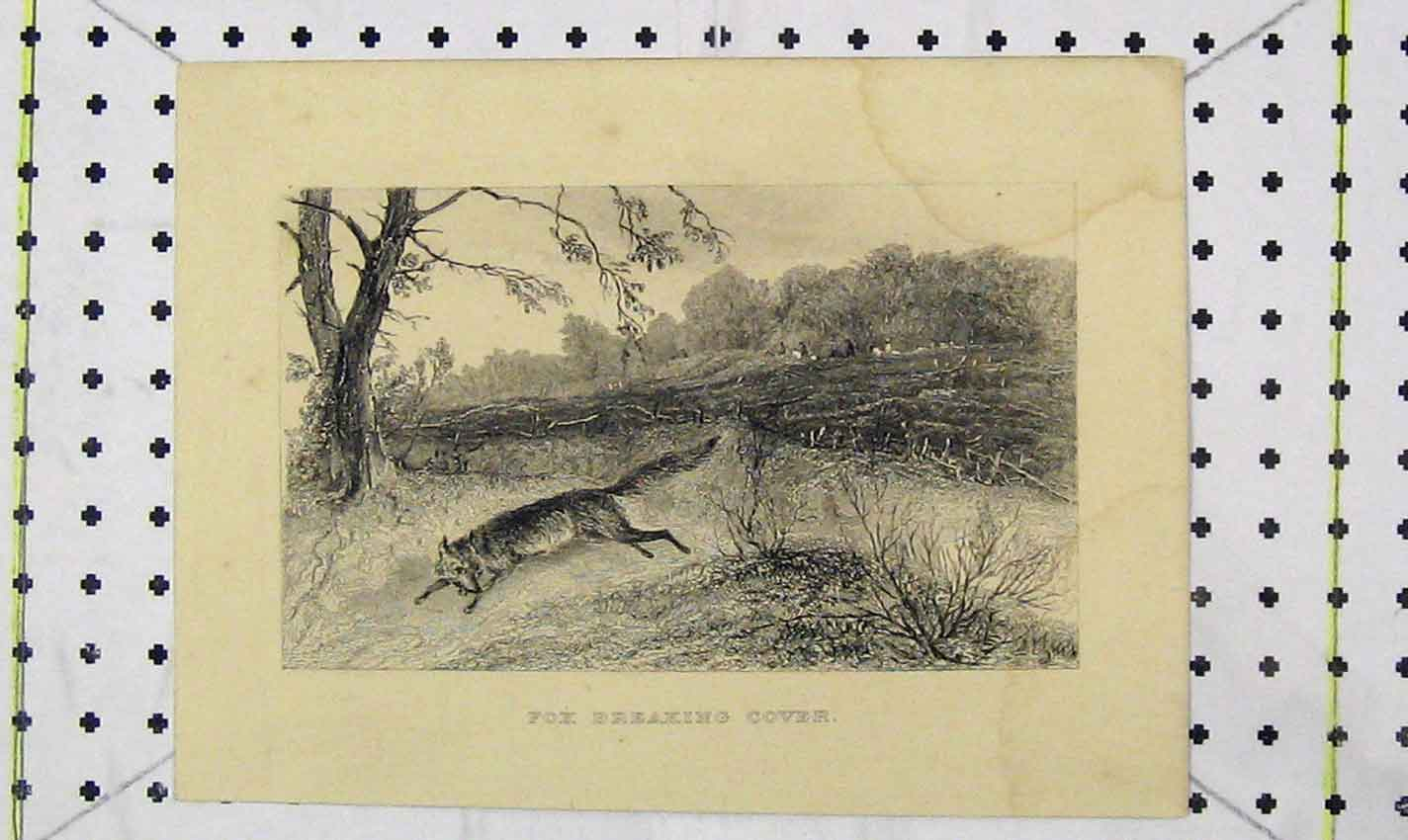 Print Fox Breaking Cover View Country Hunting 141B226 Old Original