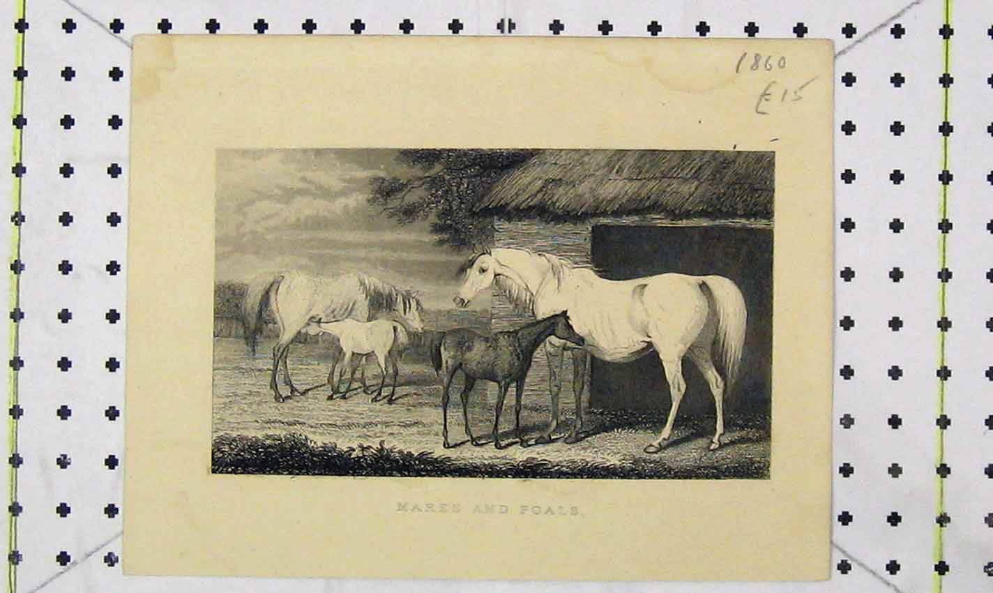 Print 1860 View Horses Mares Foals Stable 142B226 Old Original