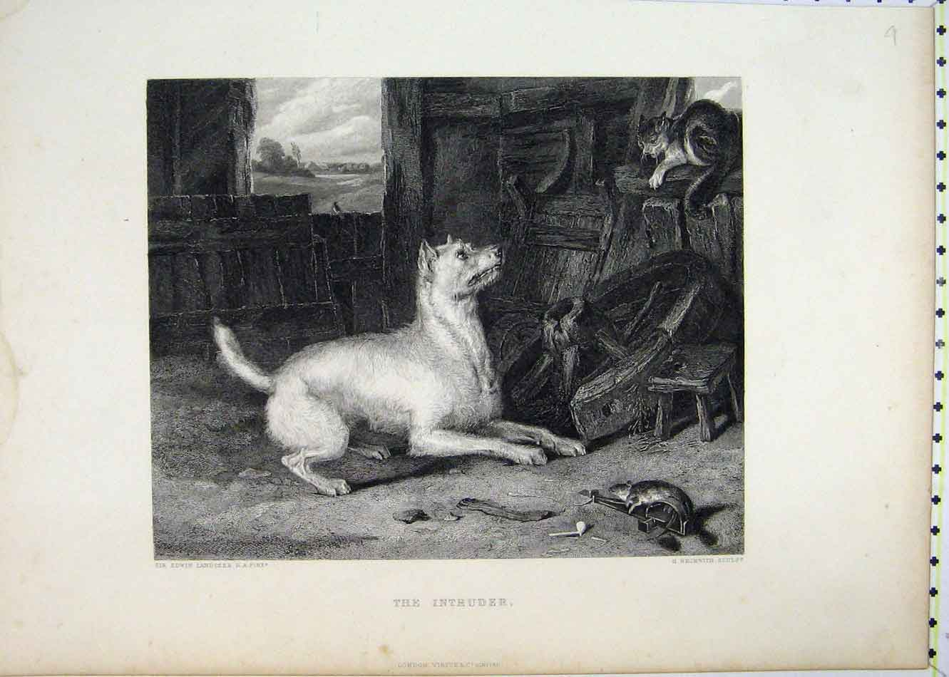 Print Dog Cat Mouse Barn Beckwith Engraved 221B231 Old Original
