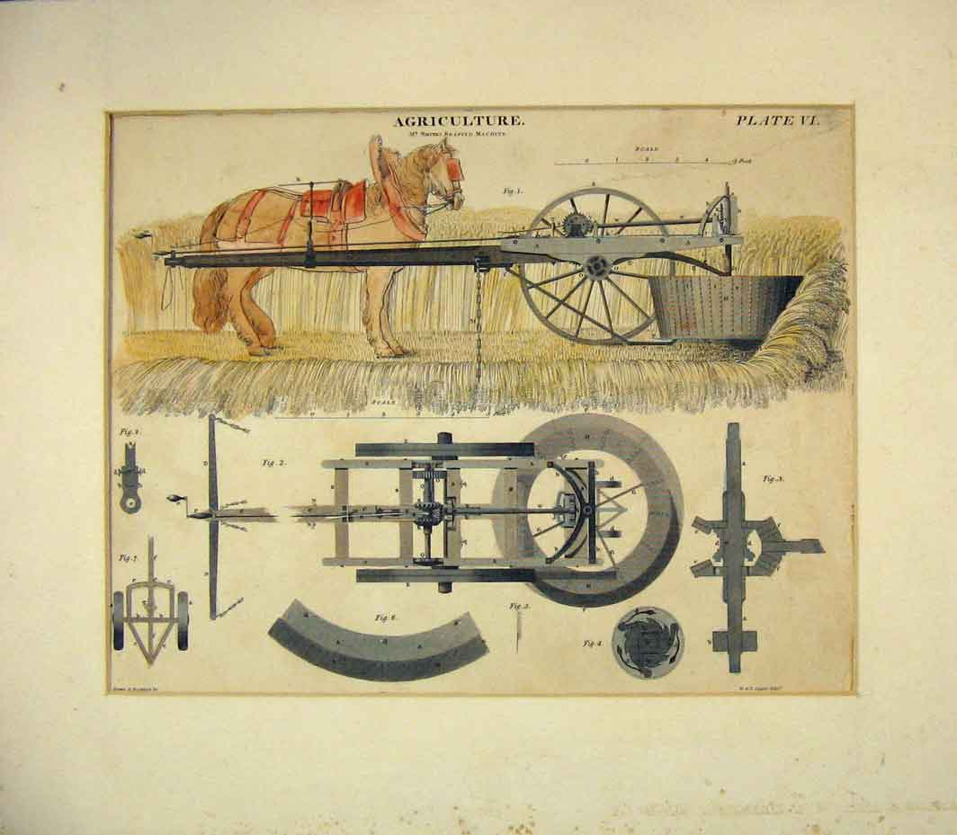 Print Colour Agricultural Reaping Machine Horse Lizars 219B262 Old Original