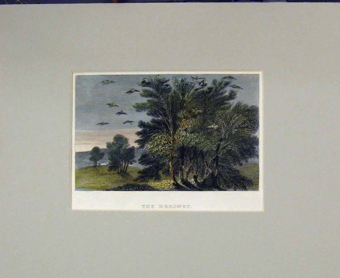Print 1840 Hand Coloured View Heronry Birds Trees 408B281 Old Original