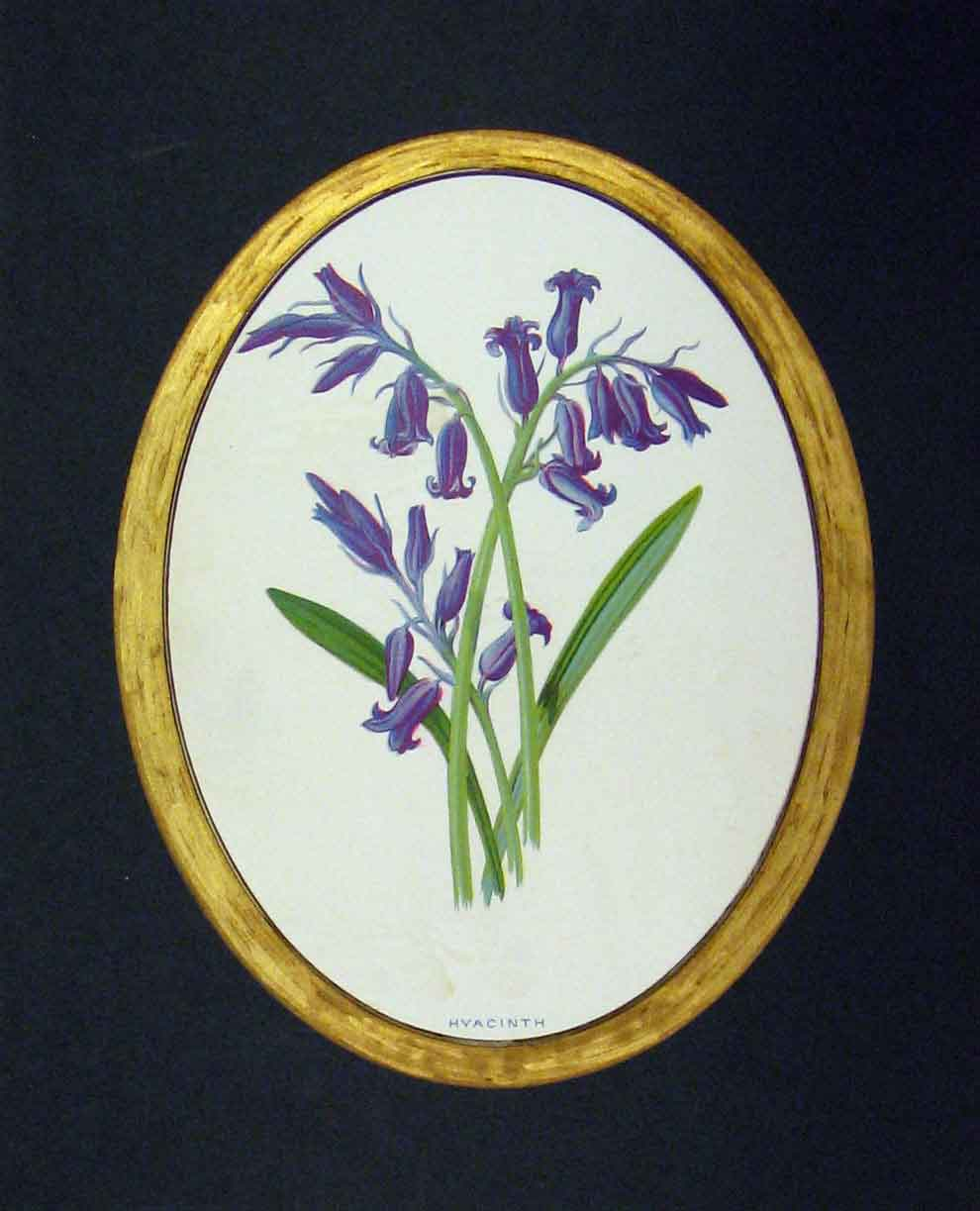 Print 1890 Colour Flower Purple Hyacinth Nature Plants 328B282 Old Original