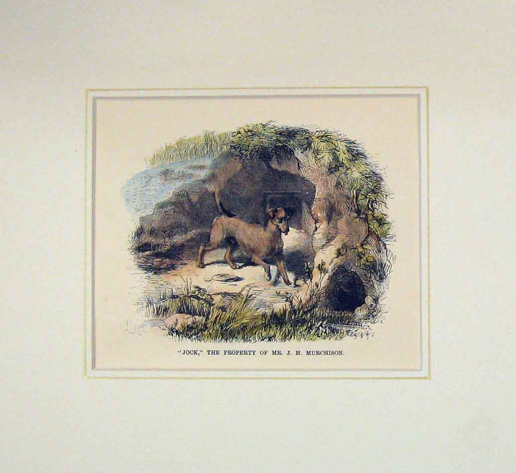 Print 1870 Hand Coloured Dog Jock Mr Murchison Pet 104B286 Old Original
