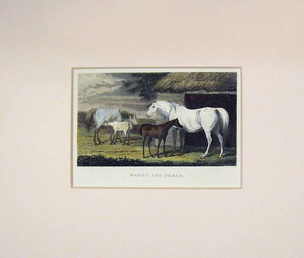 Print 1830 Mares Foals Horses Country Scene 104B288 Old Original
