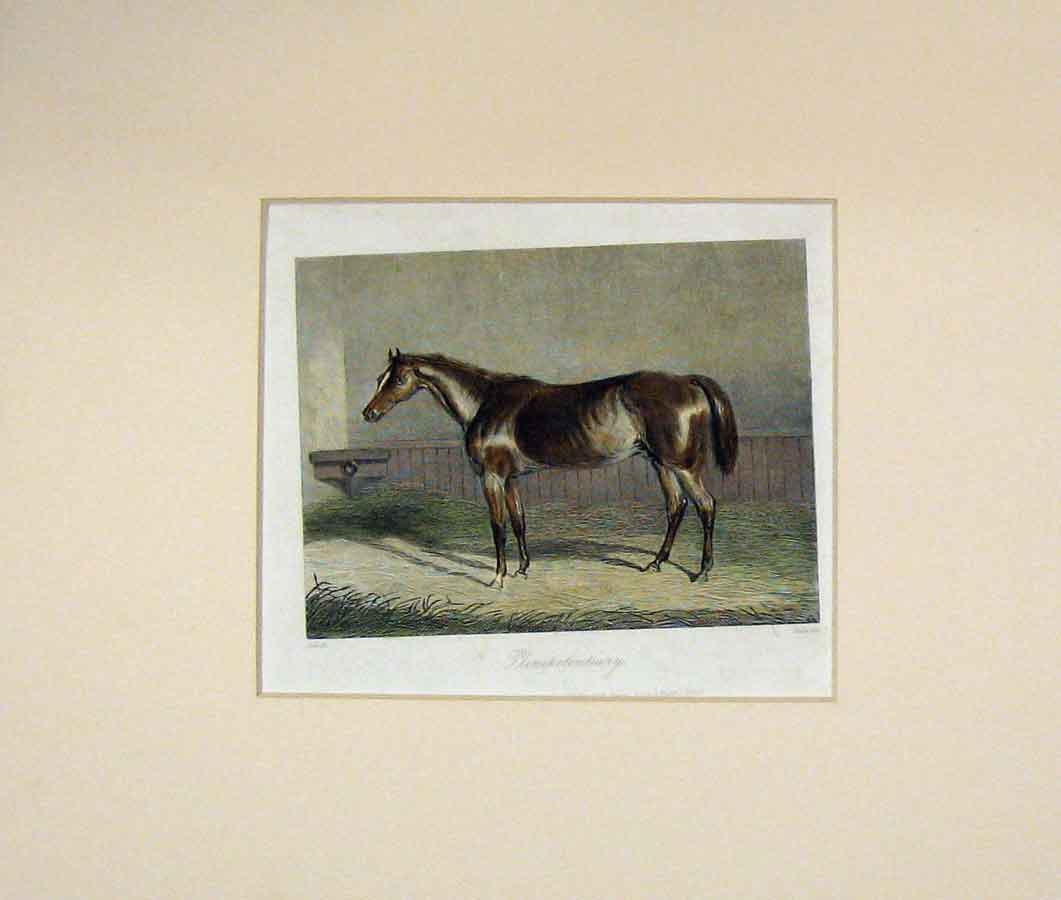 Print 1840 Colour Horse Plenipotentiary Stable Scene 105B288 Old Original