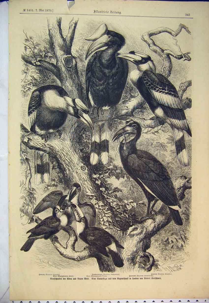 Print 1870 German Magazine Birds Nature Wildlife Tree Animals 407B346 Old Original