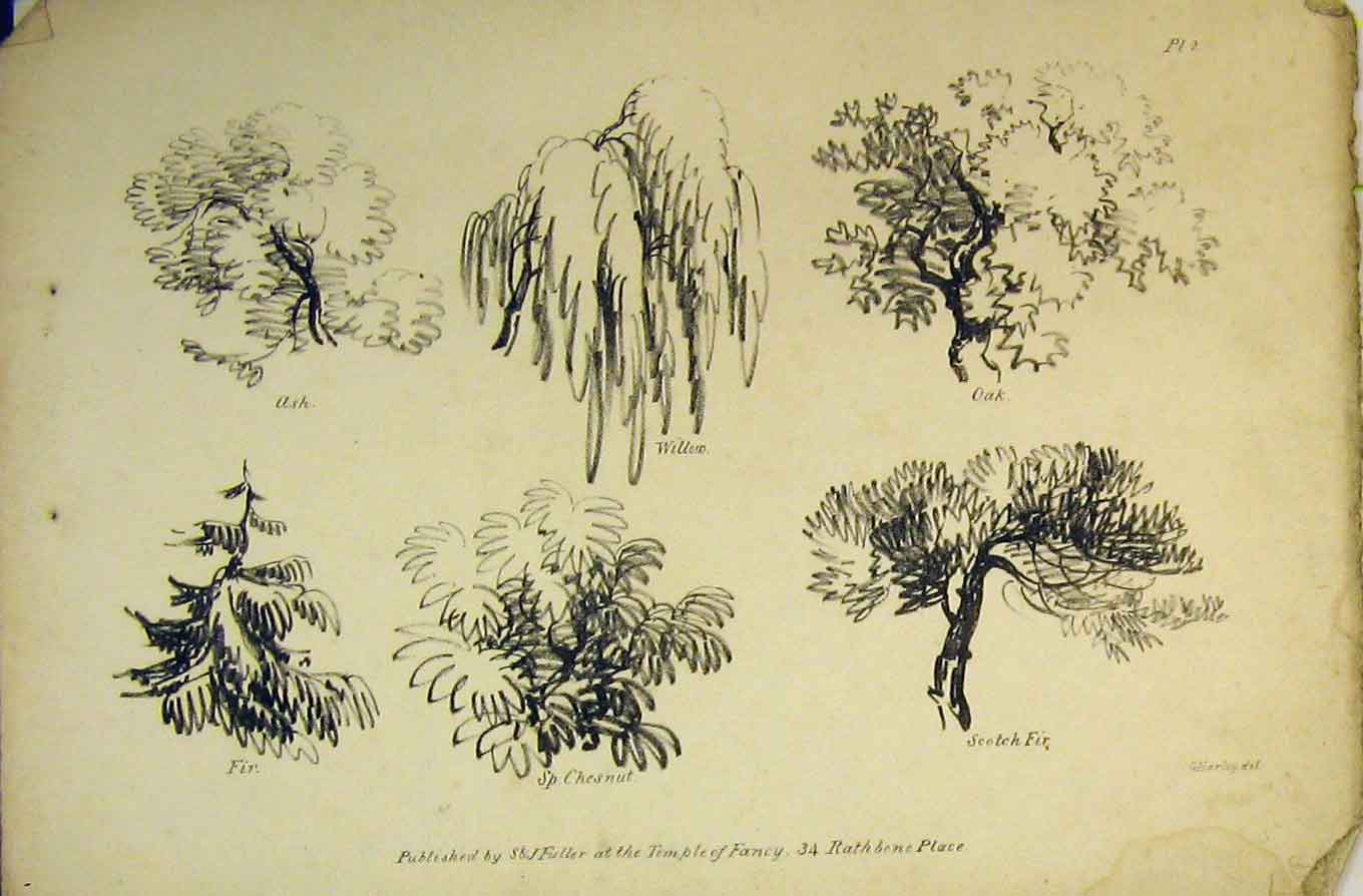 Print Trees Willow Ash Oak Scotch Fir Chestnut Temple Fancy 103B359 Old Original