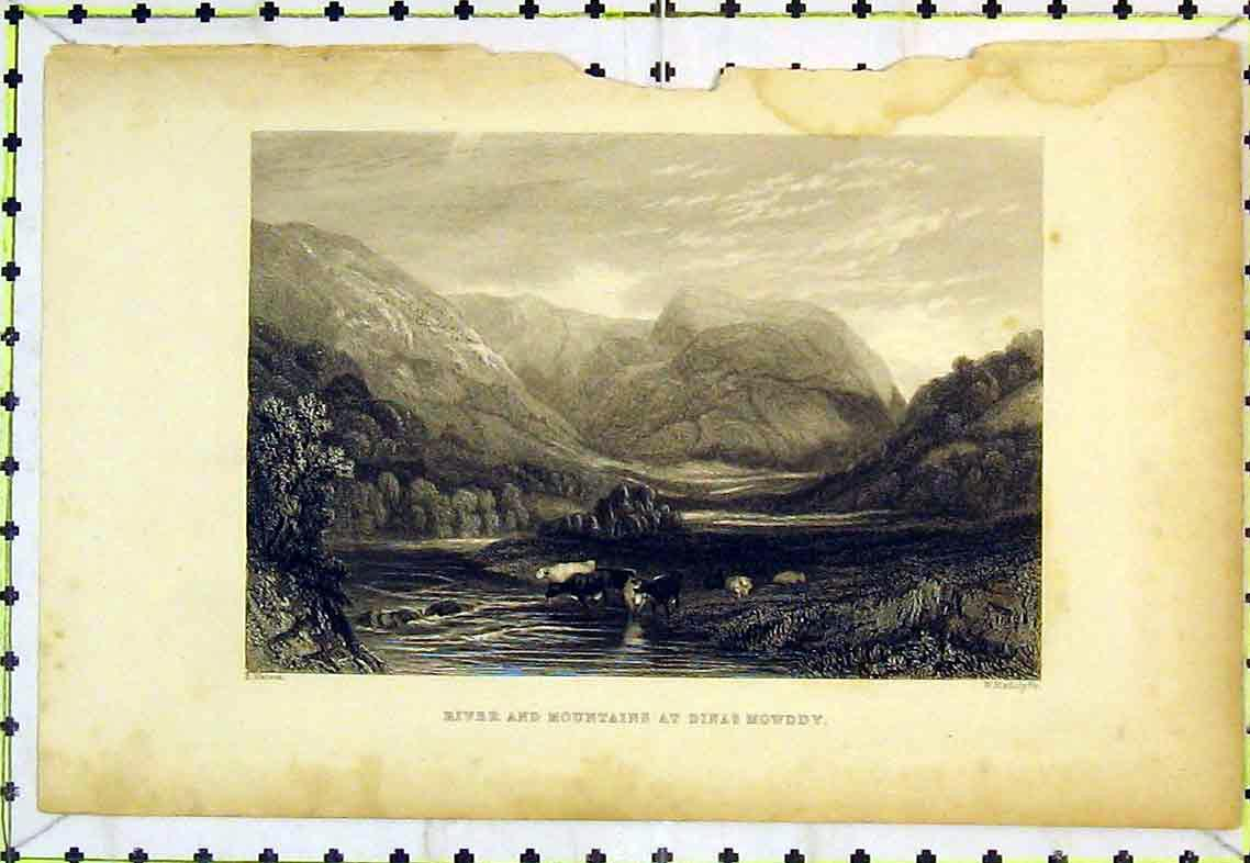 Print View River Mountains Dinas Mowddy Cows Mountains Tree 304B363 Old Original