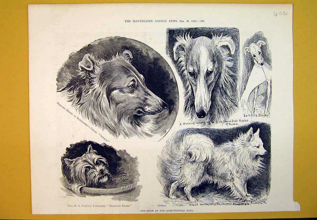 [Print 1892 Dog Show Agricultural Hall Collie Terrier Barzois 402B388 Old Original]