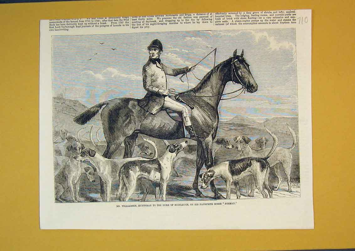 Print Williamson Huntsman Duke Buccleuch Horse Norman Dog 710B390 Old Original