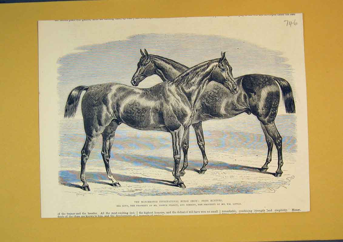 Print Manchester International Horse Show Hunters Sheriff Erl 746B390 Old Original