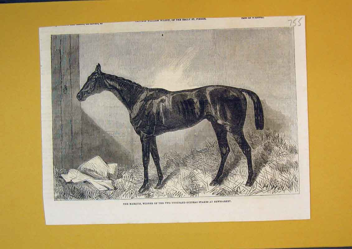 Print Horse Marquis Winner Thousand Stakes Newmarket 755B390 Old Original