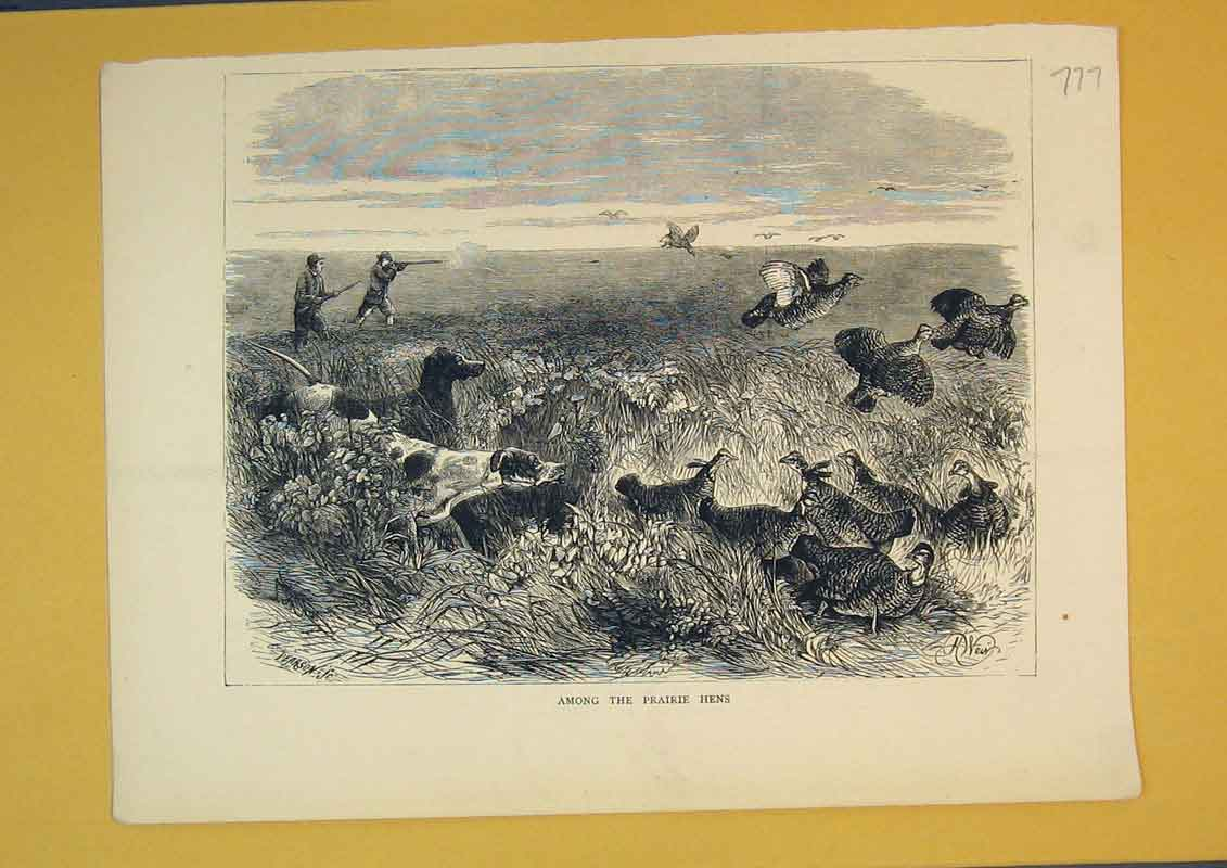Print Country Scene Prairie Hens Birds Nature Shooting Men 777B390 Old Original