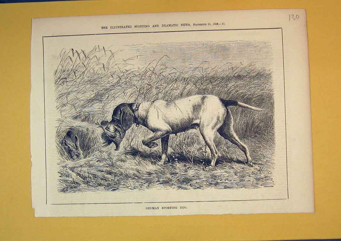 [Print 1880 German Sporting Dog Bird Hare Country Animals 130B391 Old Original]