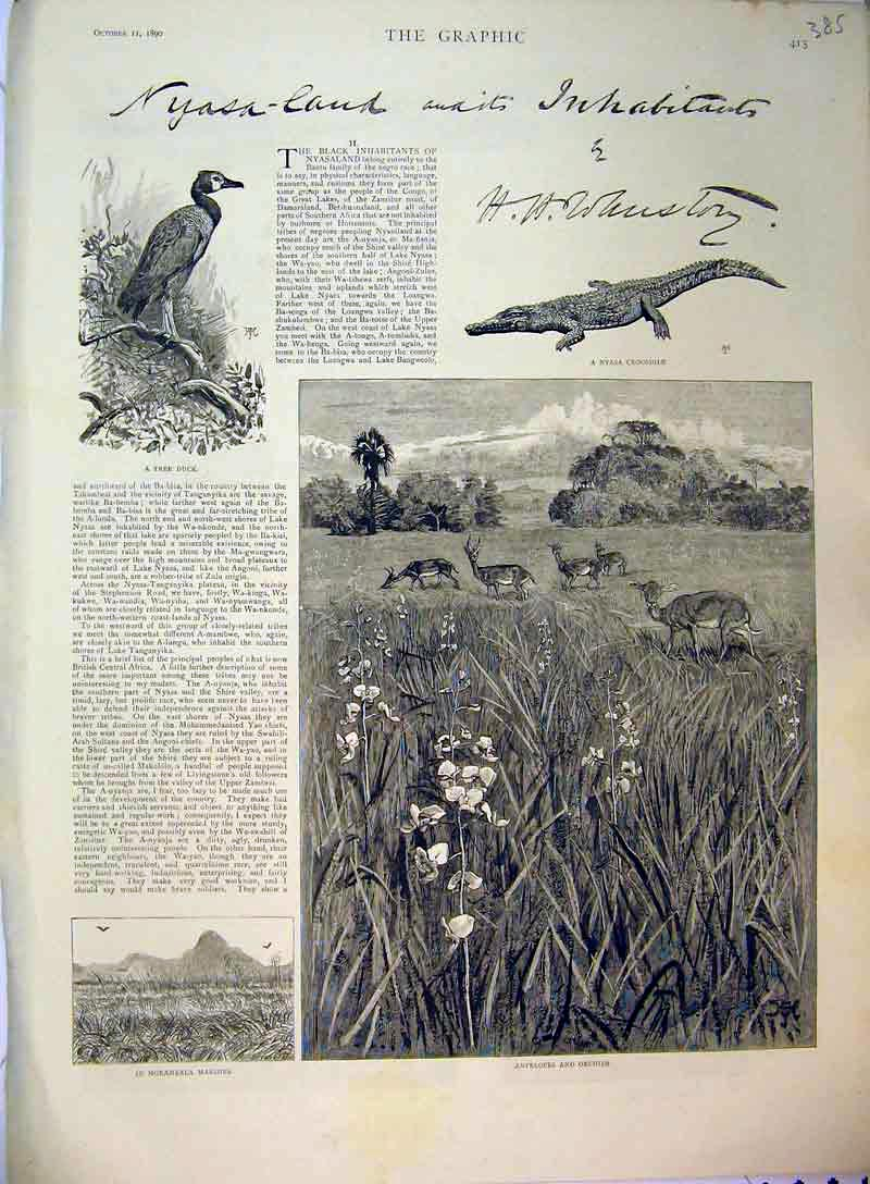 Print 1890 Antelopes Orchids Nyasa Crocodile Tree Duck Nature 385B397 Old Original