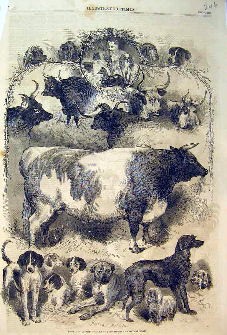 Print 1865 Prize Cattle Dogs Birmingham Christmas Show Animal 246B398 Old Original