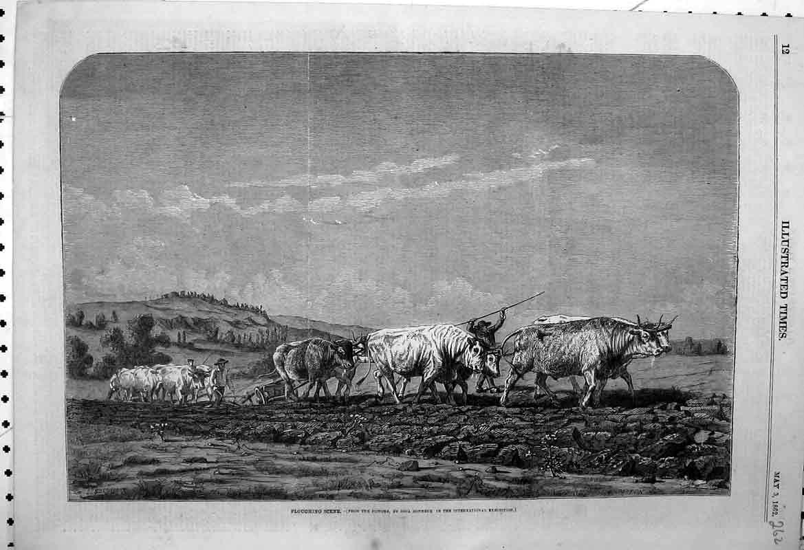 Print Country Scene Farming 1862 Cows Ploughing Field Farmer 262B398 Old Original
