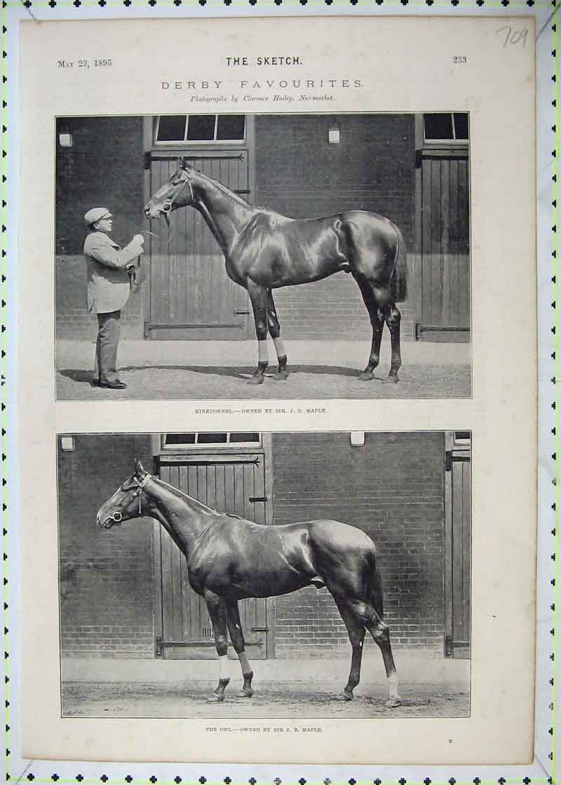 Print 1895 Derby Horses Owl Maple Kirkconnel Newmarket Hailey 709B403 Old Original
