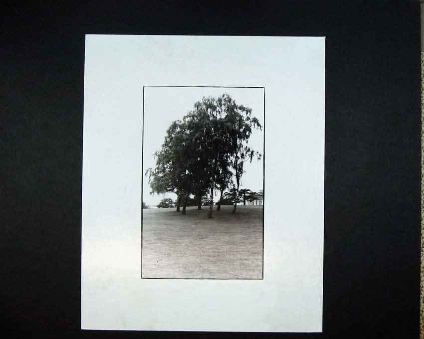 Print 1970 Andrew Ward Photographic Trees Country View 105C201 Old Original