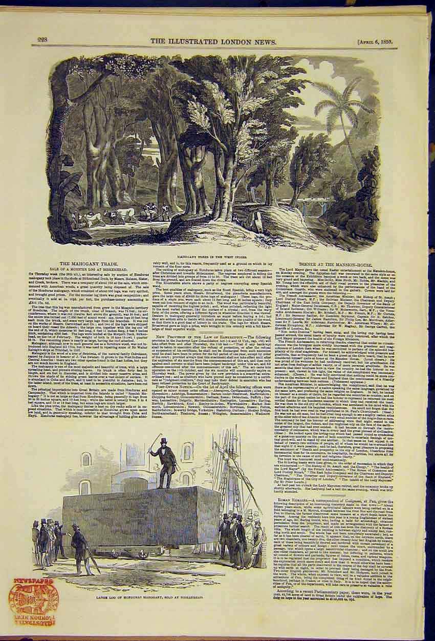 Print Mahogony Trade Tree West Indies Log Huge Picture 1850 28Ccc0 Old Original