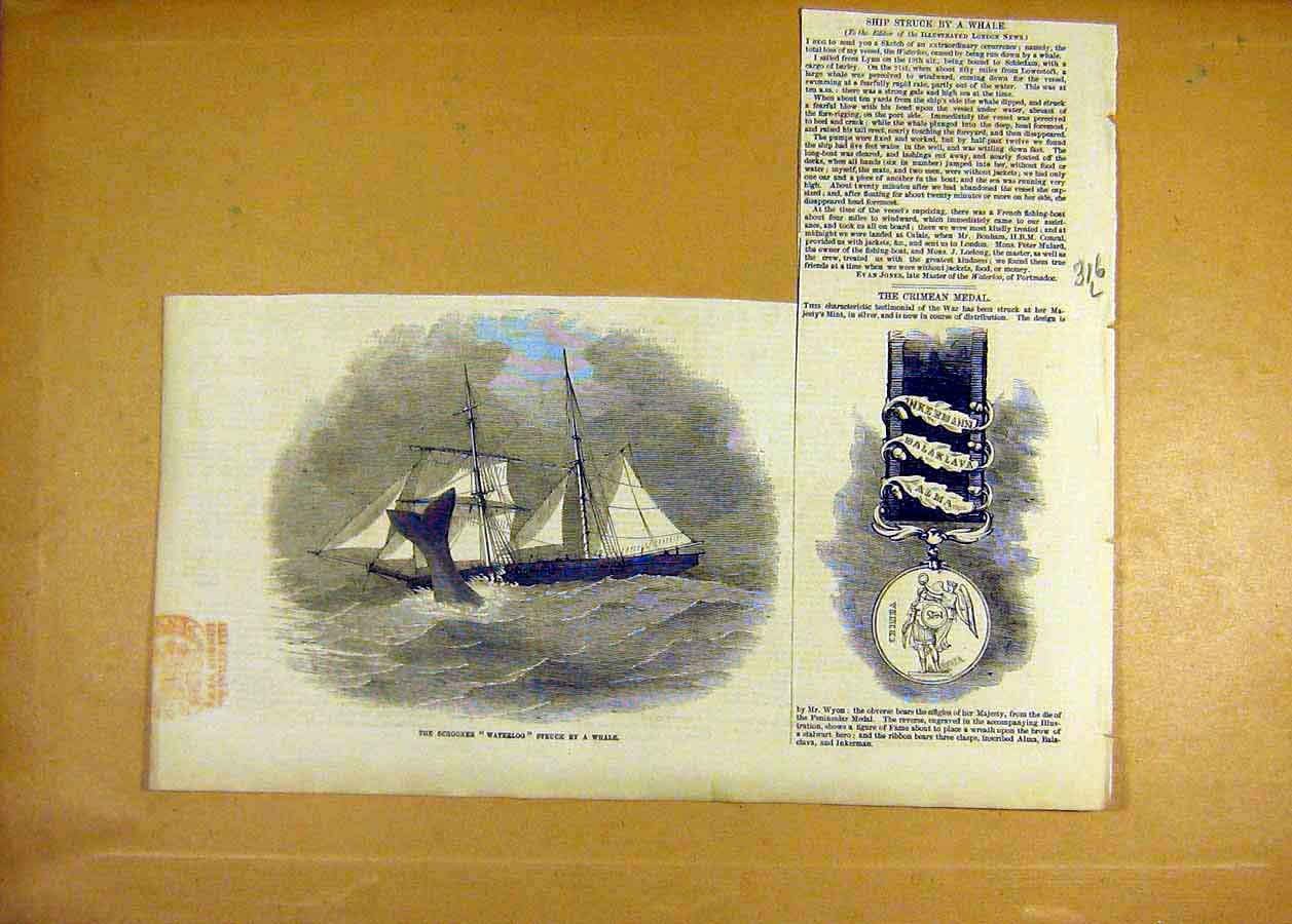 Print Schooner Waterloo Whale Crimean Medal 1855 16Lccc0 Old Original