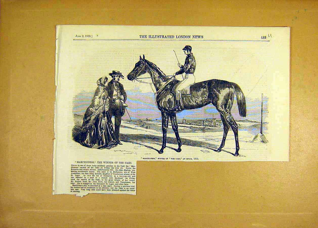 Print Marchioness Race-Horse Winner Oaks Epsom 1855 33Uccc0 Old Original