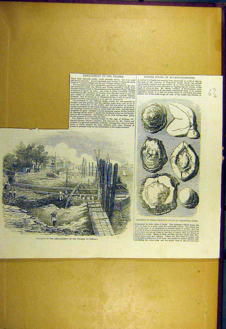 Print 1857 Fossils Buckinghamshire Thames Embankment London 67Lccc0 Old Original
