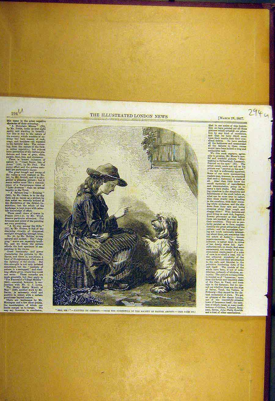 Print 1857 Beg-Sir Cobbett Fine Art Lady Girl Dog Pet 94Uccc0 Old Original