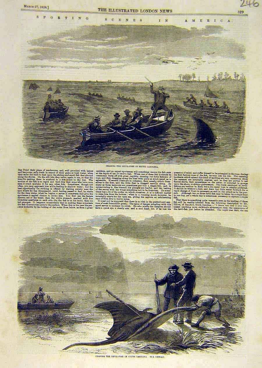 Print Sport Secnes America Devil-Fish Carolina Fishing 1858 46Ccc0 Old Original