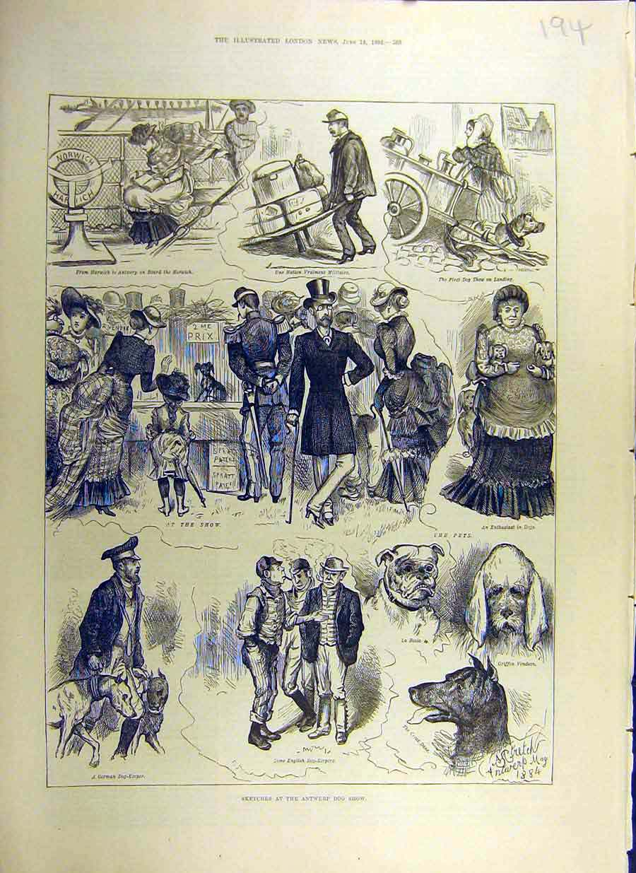 Print 1884 Sketches Antwerp Dog Show Canine Pets 94Ccc0 Old Original
