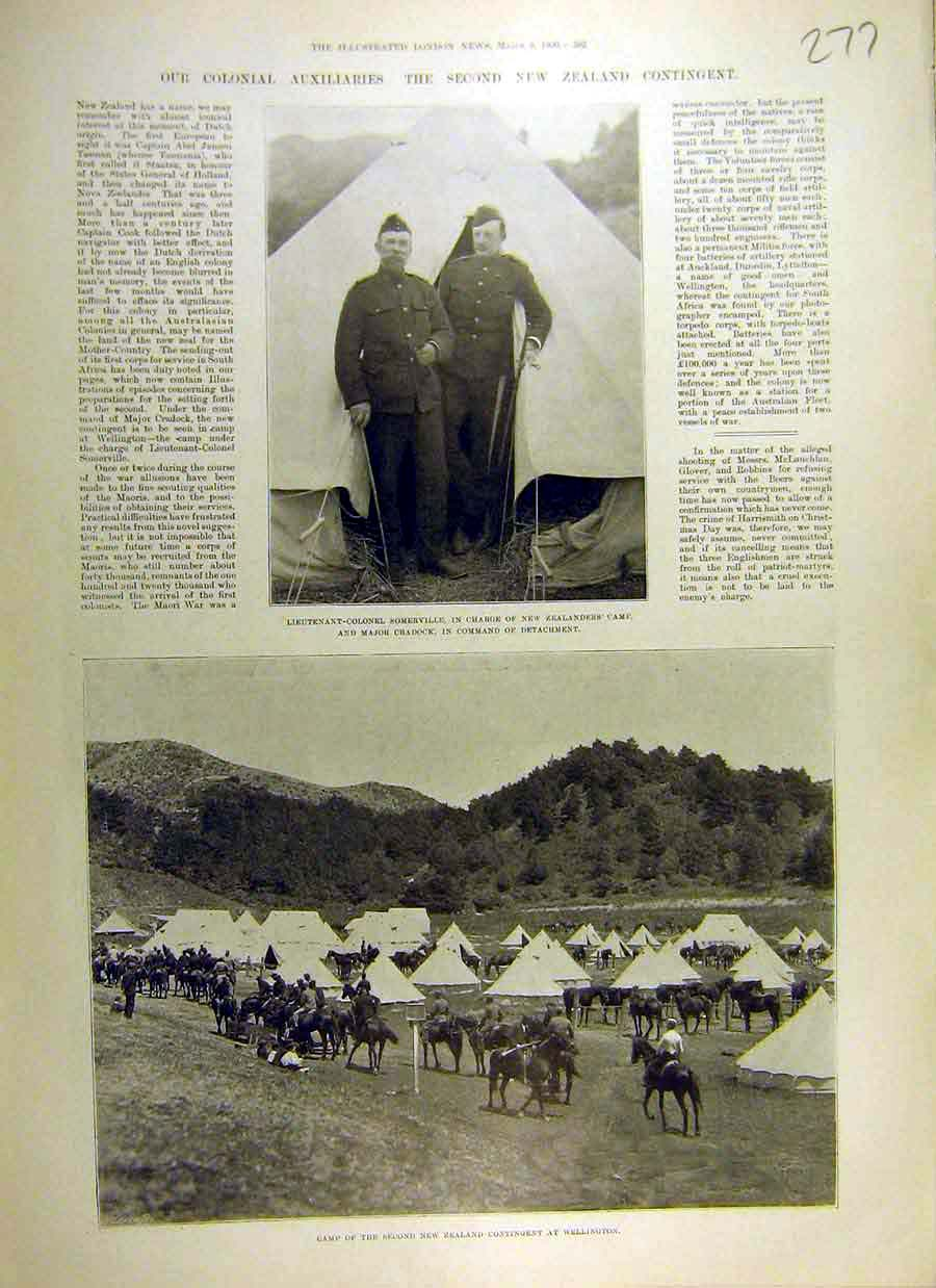 Print 1900 New-Zealand Contingent Wellington Boer War Africa 77Ccc0 Old Original