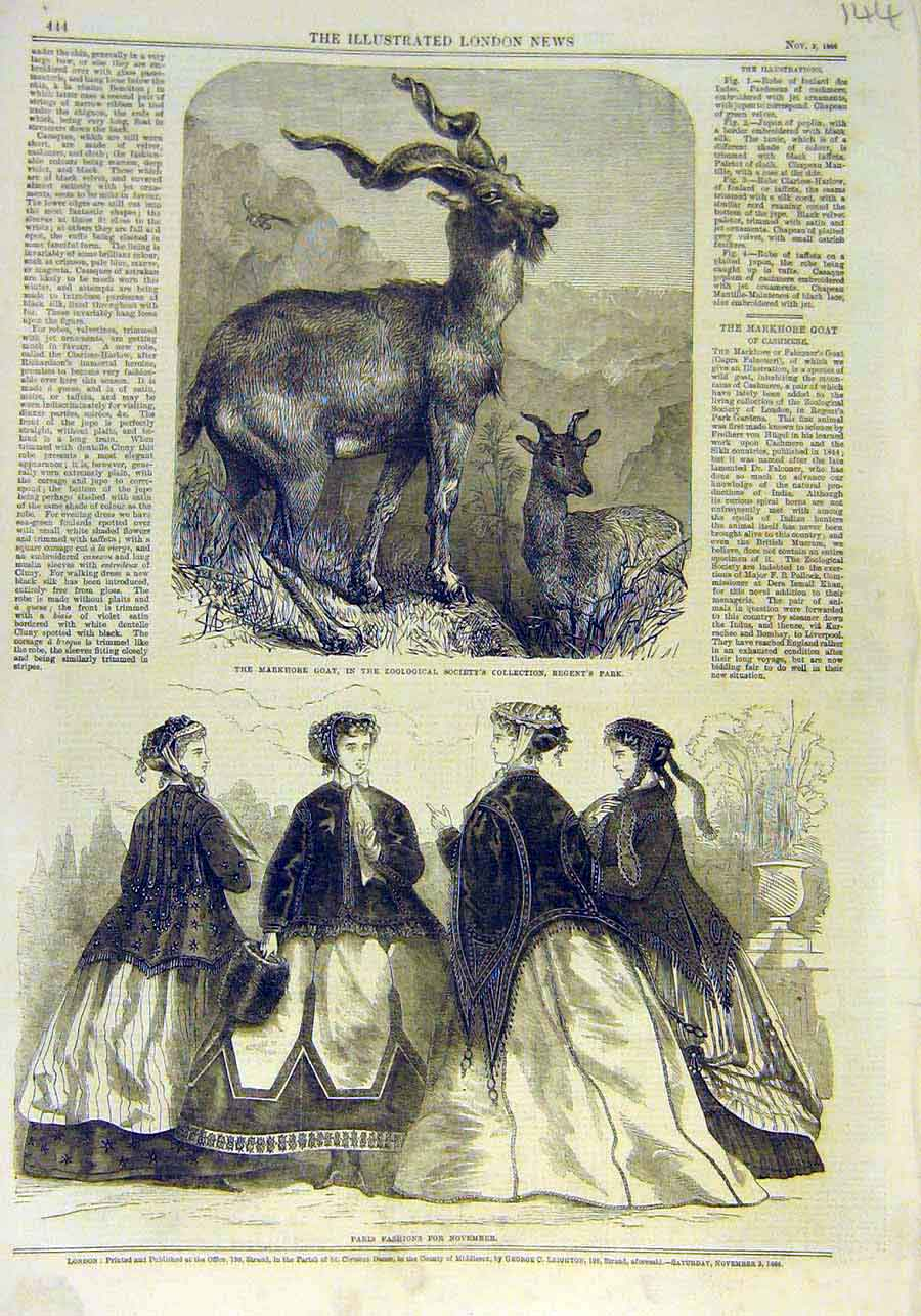 Print Markhore Goat Animal Zoo Paris Fashion Ladies 1866 44Ccc1 Old Original