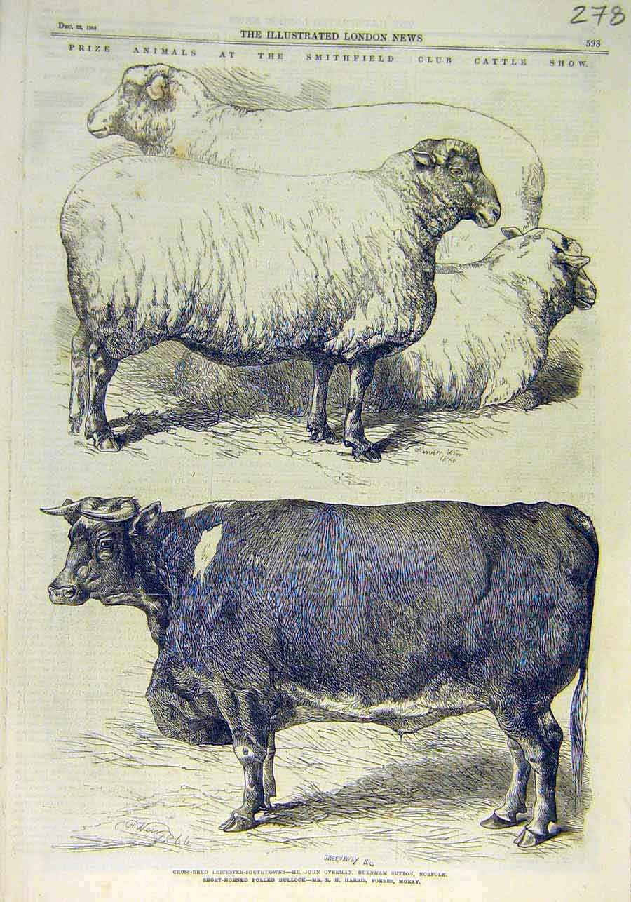 Print Smithfield Cattle Show Prize Animals Sheep Cattle 1866 78Ccc1 Old Original