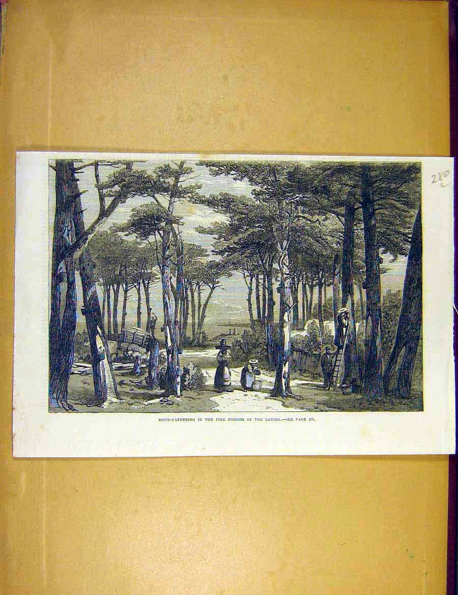 Print Resin-Gatherering Pine Forest Landes Trees 1866 80Lccc1 Old Original