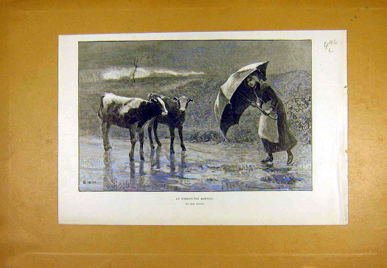 Print Unexpected Meeting Ludby Girl Calves Country 1890 96Lccc1 Old Original