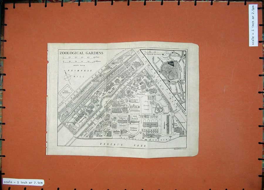 Print 1918 London England Plan Zoological Gardens Regents 110D204 Old Original