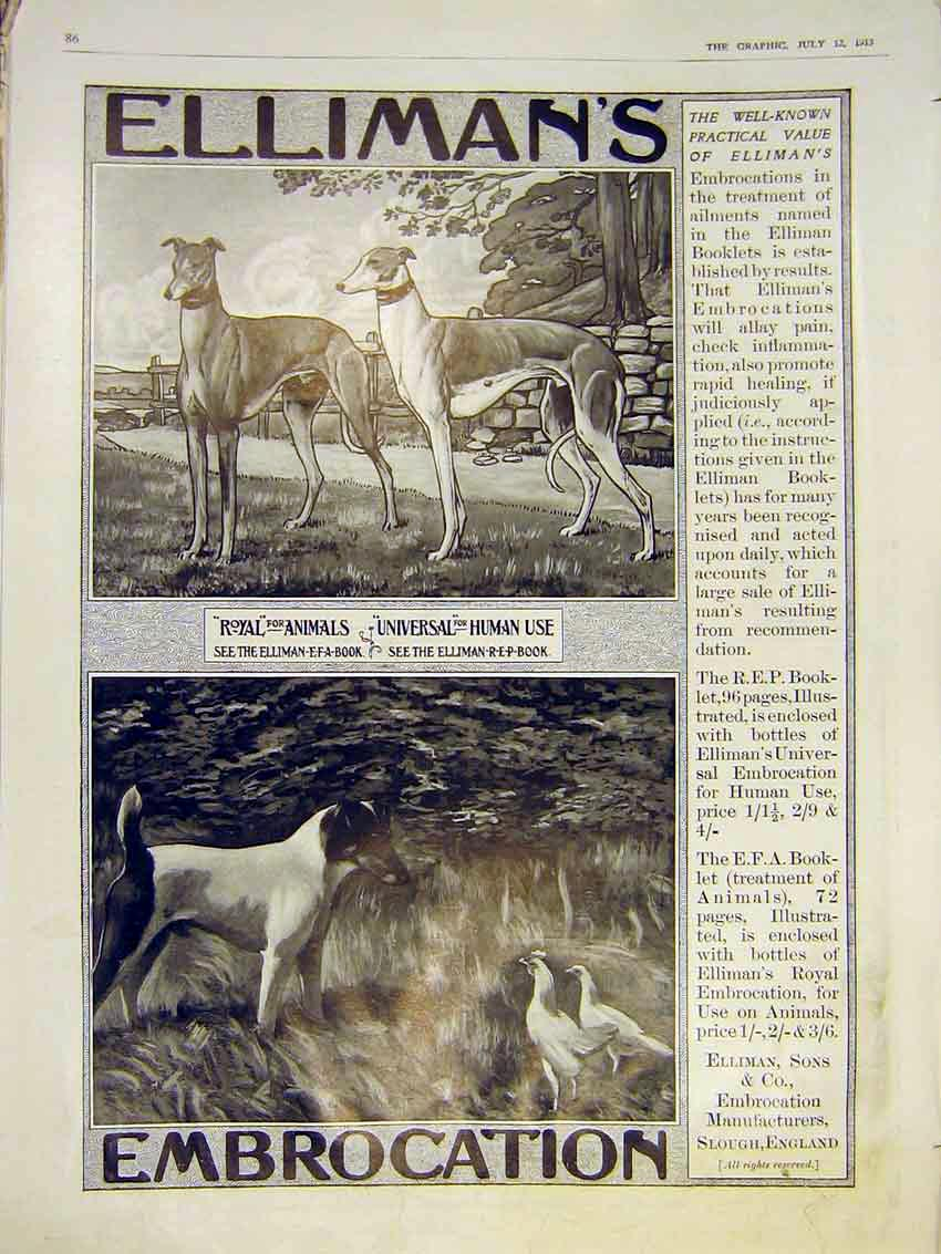 Print Advert Ellimans Royal Animals Dog Hound 1913 86Ddd0 Old Original