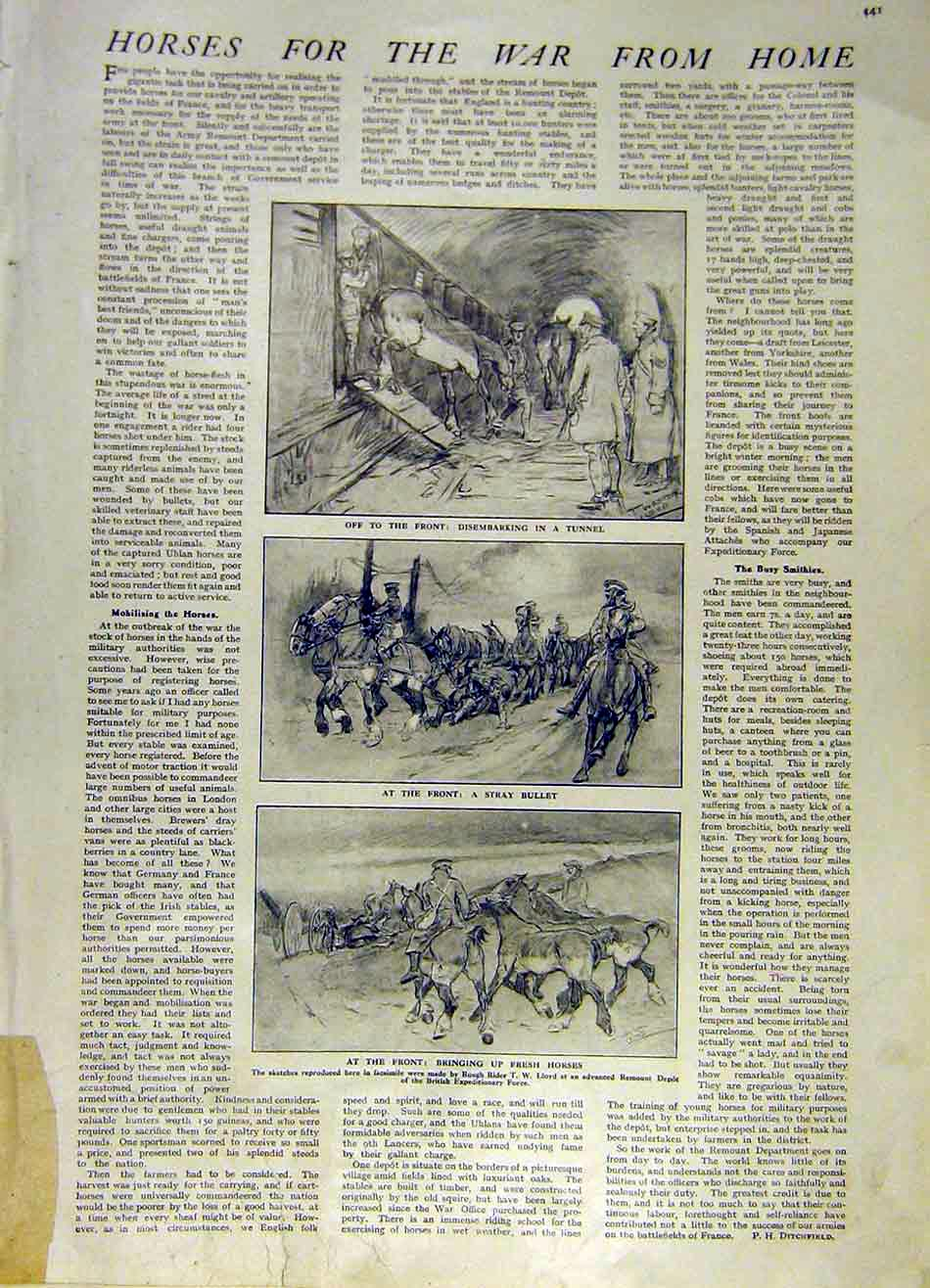Print Horses War Tunnel Lloyd Remount Depot Ww1 War 1915 41Ddd0 Old Original