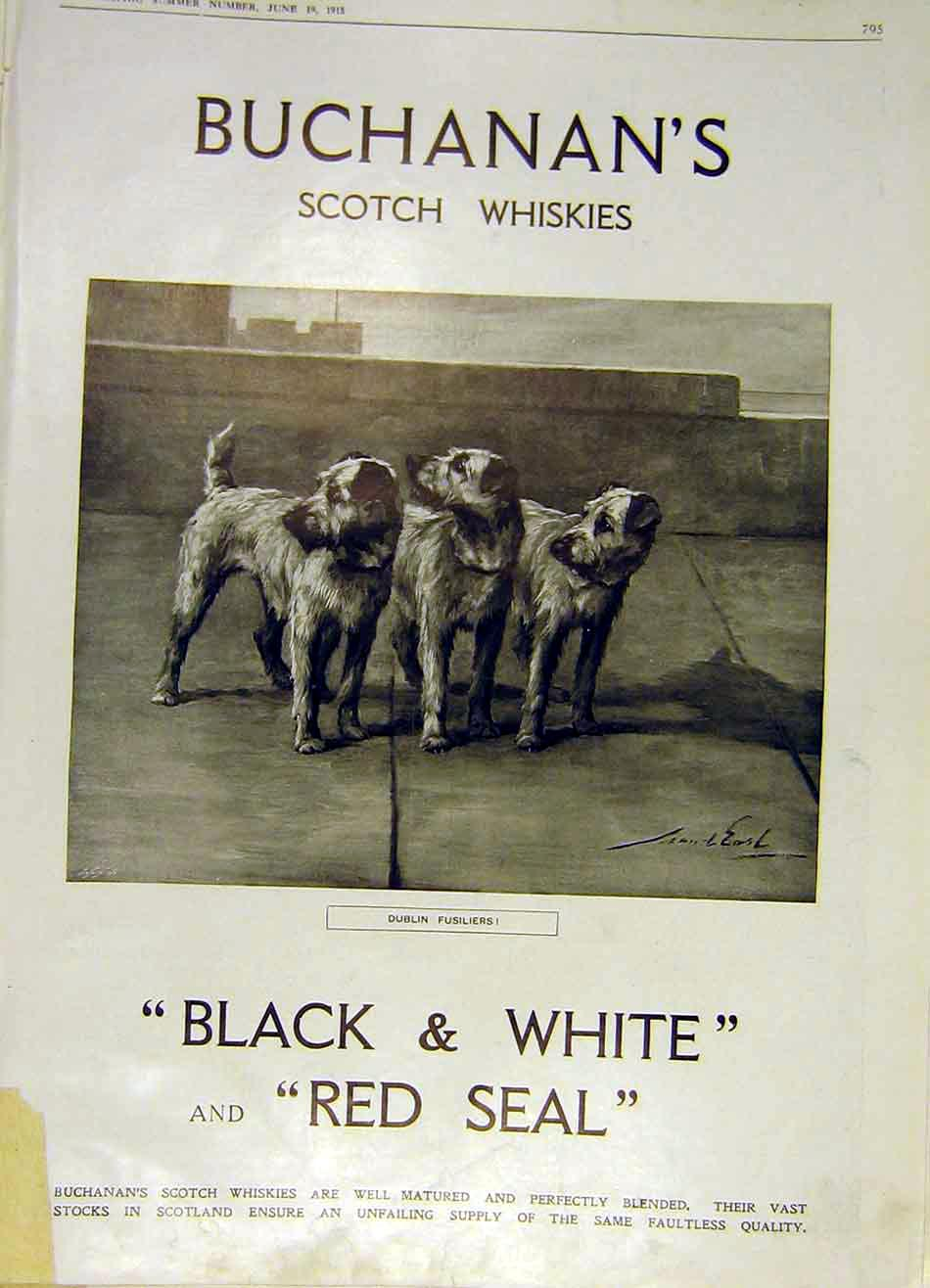 Print Dublin Fusiliers Scotch Whisky Buchanan'S 1915 95Ddd0 Old Original